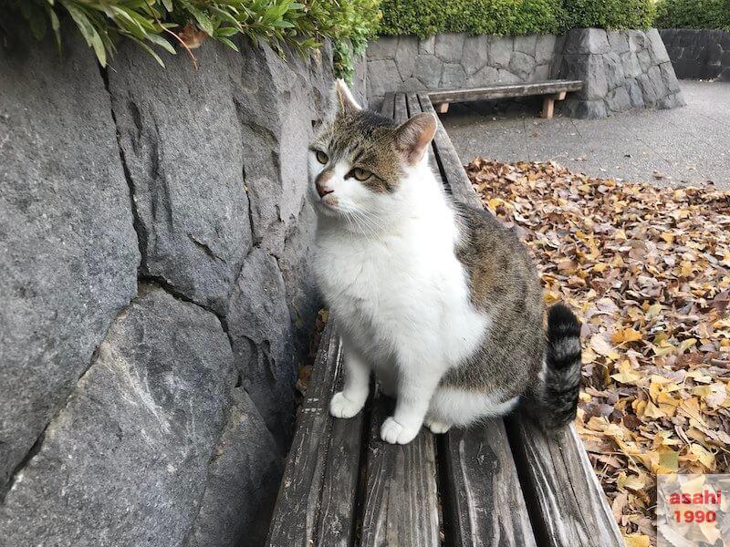 猫のアルファ