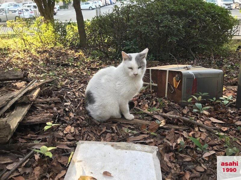 猫のデルタ