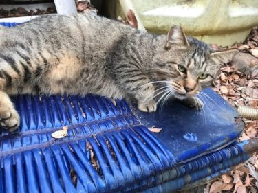 近所の公園に住む猫の観察日記#2