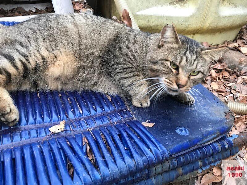 猫のガンマ