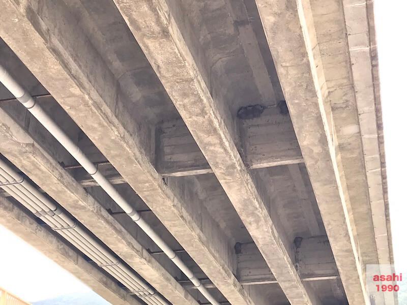 片品川ツバメの巣
